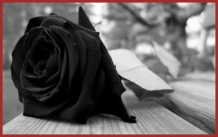 marvelous-flower-mourning-rose-sad-black-nature-desktop-wallpaper-for-pic-of-concept-and-ideas